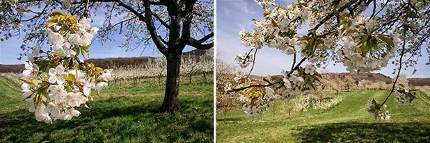 Frühling in Badenweiler 2011